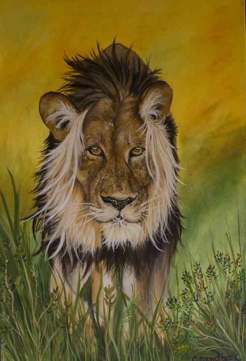 Lion. Oil Painting. Cynthia Bandurek