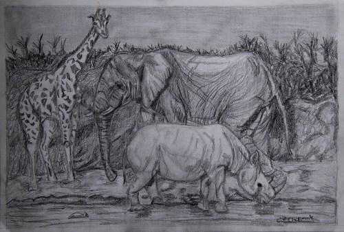 Africa - Graphite drawings- Cynthia Bandurek