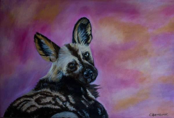 African Wild Dog - Oil. Cynthia Bandurek