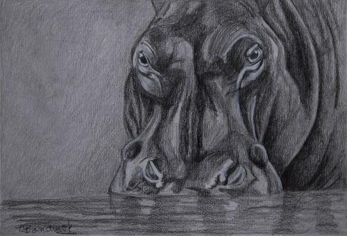Hypopotamo. Graphite drawing . Cynthia Bandurek