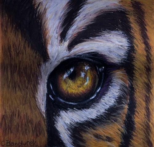 Eyes Tiger. Chalk pastel. Cynthia Bandurek