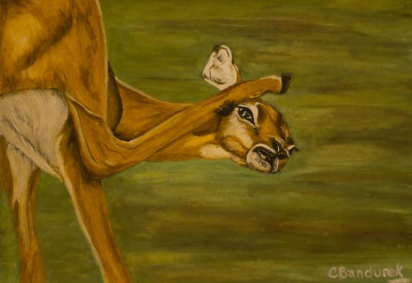 Impala. Watercolor. Cynthia Bandurek