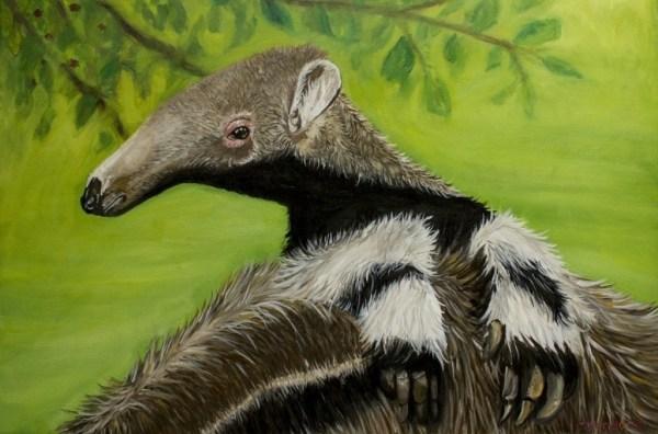 Ant eater Bear - Oil painting. Cynthia Bandurek