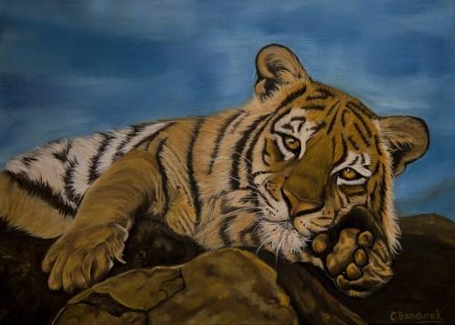 Tiger. Oil painting. Cynthia Bandurek