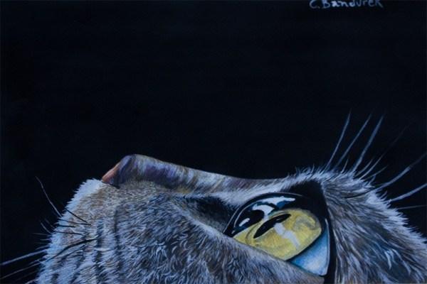 Cat - Watercolor - Cynthia Bandurek