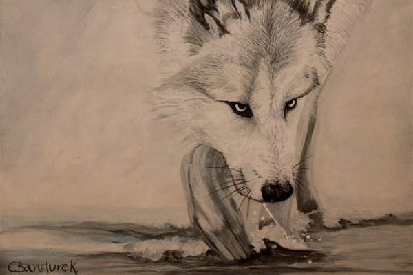 Wolf - Watercolor - Cynthia Bandurek