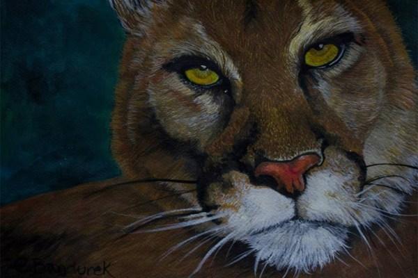 Cougar - Watercolor - CynthiaBandurek