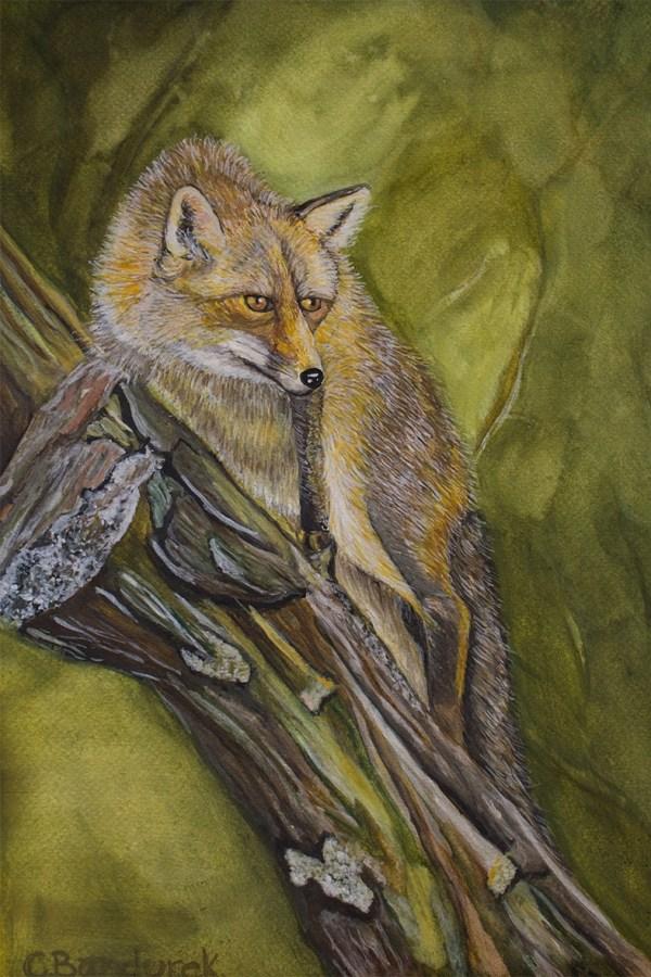 Fox. Watercolor . Cynthia Bandurek