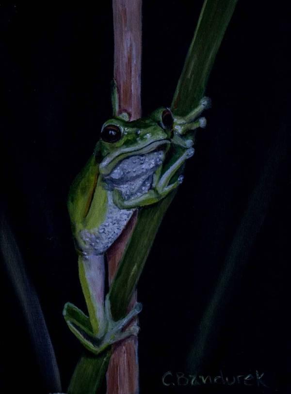 Oil painting - Cynthia Bandurek - Frog