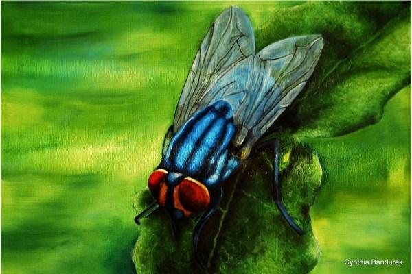 Oil painting - Fly - Cynthia Bandurek