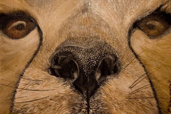 Textures - details - guepard - Chita