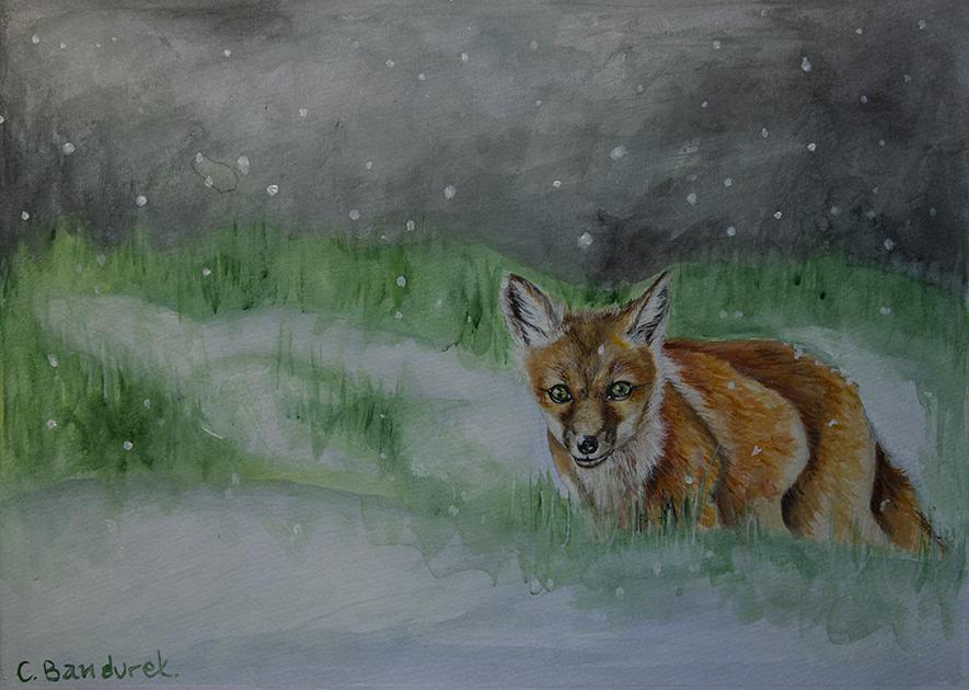 Fox watercolor - Cynthia Bandurek