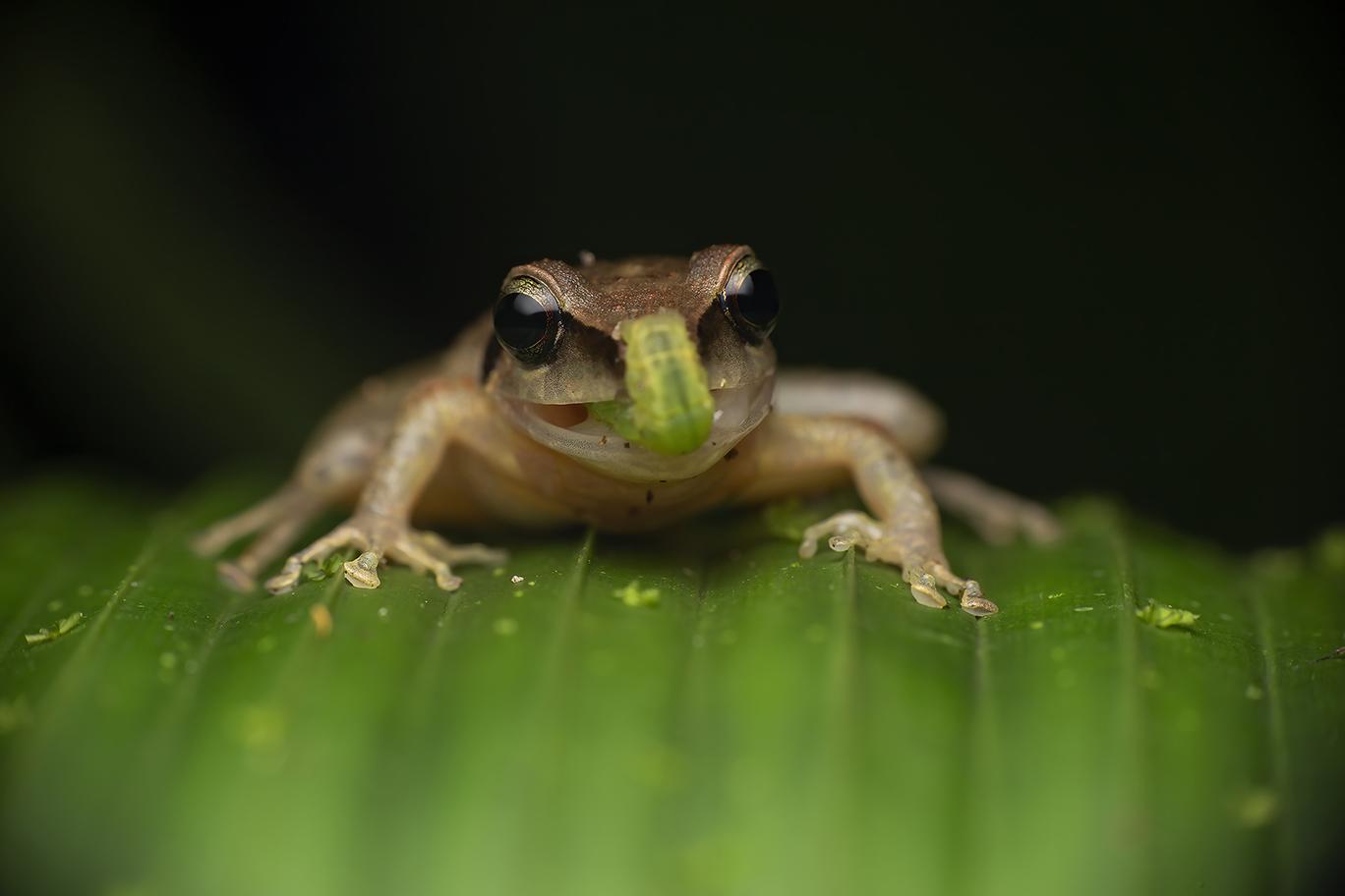 Frog - Cynthia Bandurek