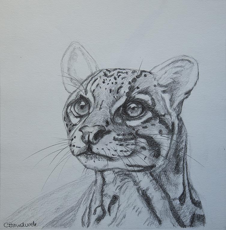 graphite drawing . Cynthia Bandurek