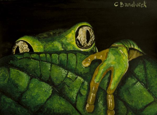 Frog - Watercolor - Cynthia Bandurek