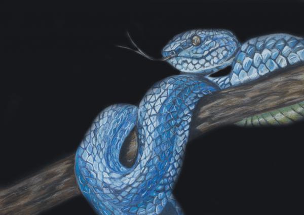Chalk pastel - snake - Cynthia Bandurek