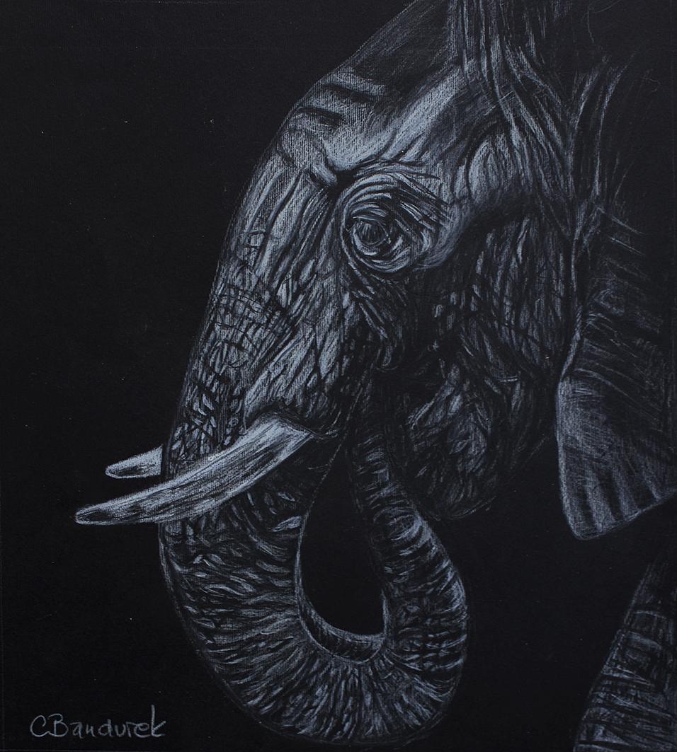 elephant black and white - Cynthia Bandurek