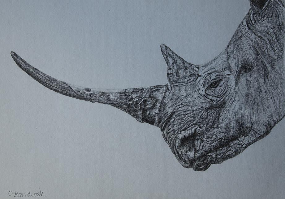 rhino graphite