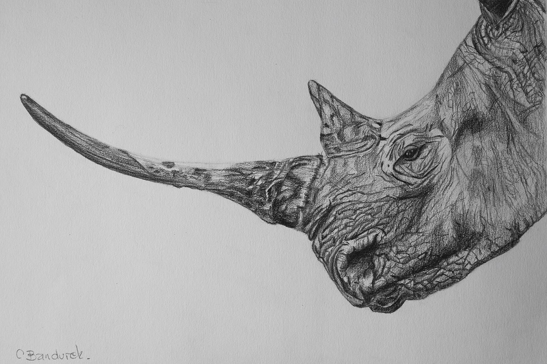 rhino-graphite.jpg