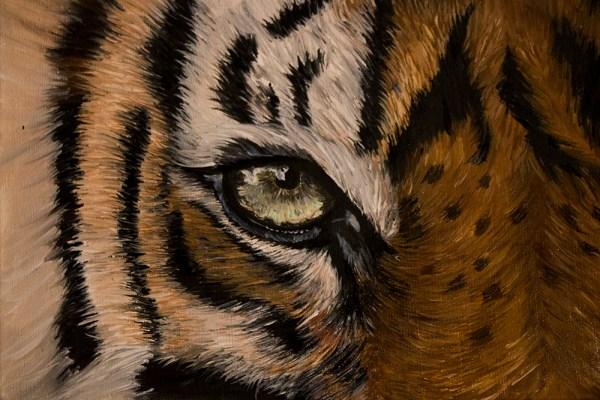 Tiger eye. Oil painting. Cynthia Bandurek