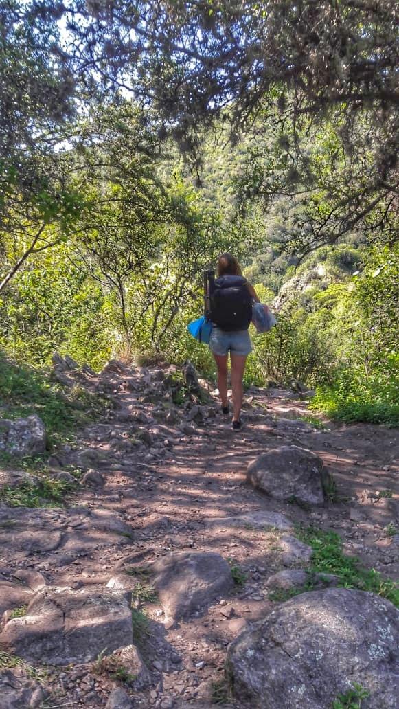 Cynthia Bandurek - exploring the forest