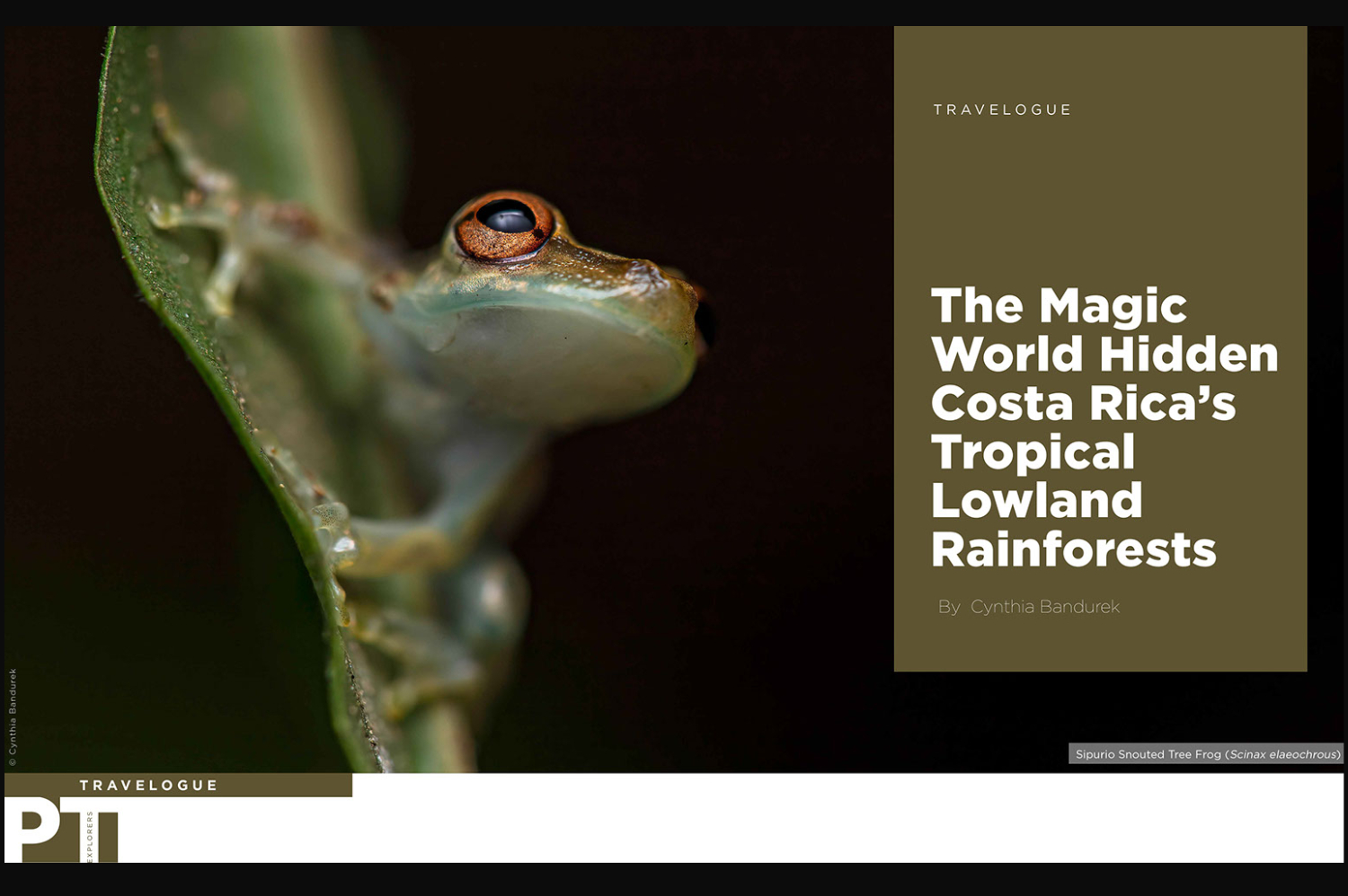 The Magic World Hidden Costa Rica's Tropical Lowland Rainforests – Paws Trails